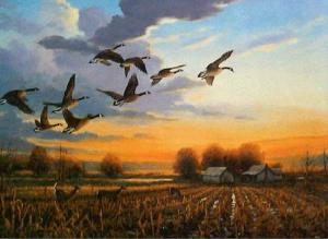 455_bird_flying_geese_b